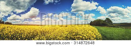 Panoramic Summer Landscape With Rapeseed Field. Agricultural Background