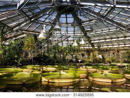 Aquatic botanical garden with giant water lilies and other plants. Interior of an old greenhouse. poster