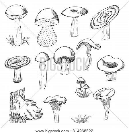 Mushroom Hand Drawn Sketch Vector Illustration. Mushroom Shiitake, Fresh Organic Food Isolated On Wh
