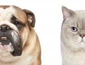 Dog and cat. Half of muzzle close-up portrait on a white background poster