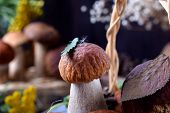 Little boletus edulis with a leaf and fuzz on its cap poster