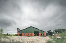Cow Standing By A Red Barn In A Rural Countryside Landscape In Cloudy Weather