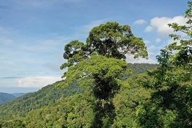 Aerial rainforest canopy in Malaysia