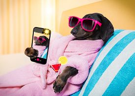 Cool Funny  Sausage  Dachshund Dog Resting And Relaxing In   Spa Wellness Salon Center ,wearing A  P