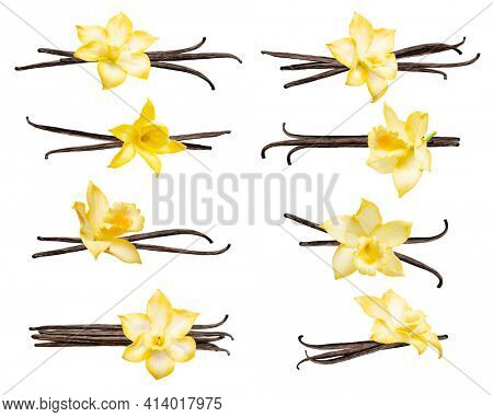Set with vanilla pods and flowers isolated on the white background. Collection of vanilla orhid flowers and vanilla sticks.