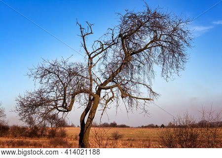 Silhouette of bare tree with erratic shaped branches