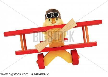 Cute chick aviator is flying by plane funny conceptual photo isolated on white background