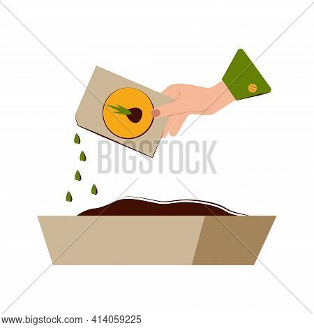 Growing Seedlings At Home. Self-cultivation Of Seedlings. The Hand Pours The Seed From The Bag Into