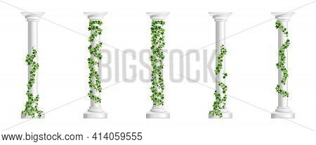 Marble Greek Columns With Green Ivy Creeper Isolated On White Background. Stone Pillars With Climbin