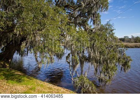 Live Oak Tree On The Banks Of The Ashely River In Charleston, South Carolina. The River Was The Wate