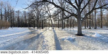 Panoramic Image Of Spring Park, Shadow Of Black Trunks Of Trees At Sunset