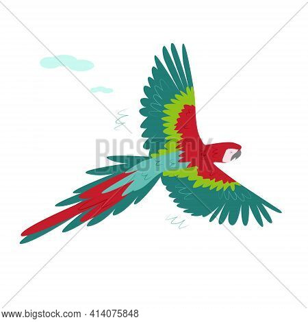 The Red Tropical Macaw Spread Its Wide Wings In Flight. Tropical Parrots. Vector On A White Backgrou