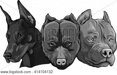 Design Of Heads Of Dogs Pitbull Dobermann Bulldog Vector