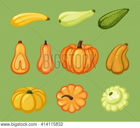 Pumpkins And Zucchini Set. Ripe Yellow Vegetable With Green Organic Veins Star Shaped Round Squash B