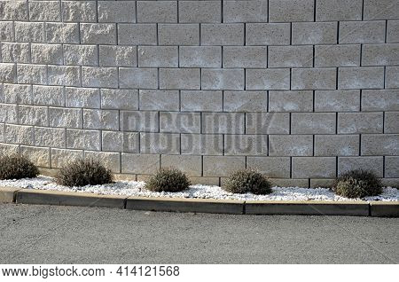 Lavender Near A Concrete Panel Wall, A Fence Made Of Cement Boards. Lavender Cut Into A Sphere. Mulc