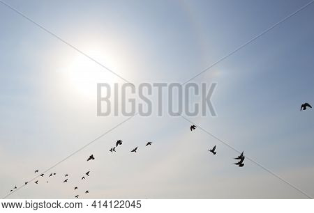 Beautiful View Of Sun Halo And Flying Birds In Blue Sky Outdoors