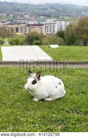 White Rabbit On Fresh Green Grass In The Park