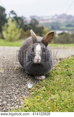 Wild Gray Rabbit In The Park On An Asphalt Road With Grass And Trees In Blur