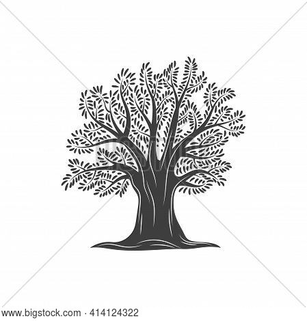 Tree Of Olives, Olive Oil Icon, Mediterranean Label Of Food And Extra Virgin Product Company Sign, V