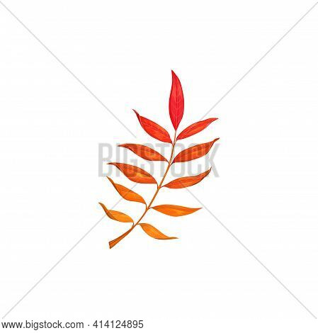 Autumn Leaves, Fall Tree Red Foliage Of Ash, Rowan, Isolated Vector. Dry Red Rowan Or Ash Tree Leave