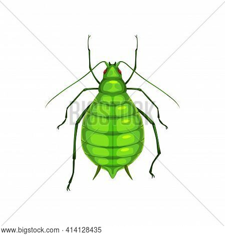 Aphid Insect, Parasite Bug Pest Control And Agriculture Disinsection Service, Isolated Vector. Aphid