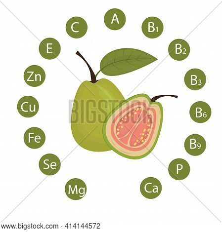 Vector Illustration Of Guava With An Indication Of The Vitamins And Minerals Contained In It. Health