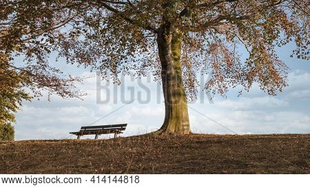 A bench in an autumn park under a colorful tree