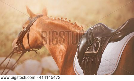 A Sorrel Horse With A Braided Mane And A Leather Saddle On Its Back Is Pulled By The Bridle Rein, An