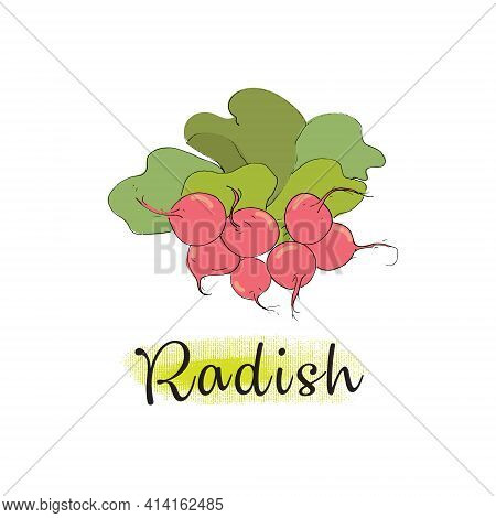 Radish, A Bunch Of Radishes With Leaves. Isolated Vector Object.