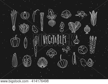 Set Of Vegetable Icons Onion, Tomato, Lettuce, Chili, Pepper, Beets, Radish, Corn, Leek, Cucumber, C
