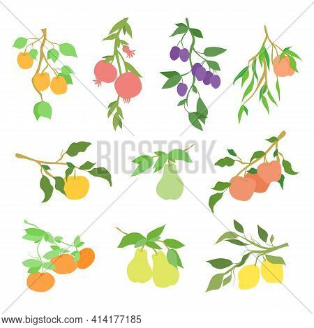 Big Vector Color Set Of Fruit Branches. Decoration For Kitchen Design, Food Packaging, Vector Flat F
