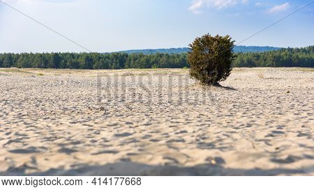 Lonley Bush On Bledow Desert, The Biggest Sand Accumulation Away From Any Sea, Located In Southern P