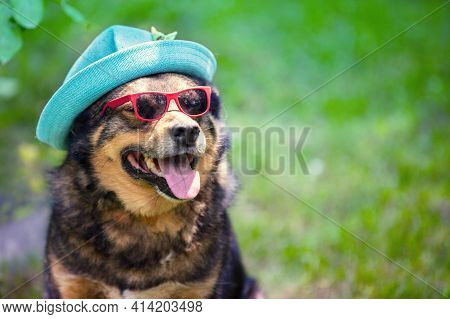 Fashion Portrait Of A Dog Outdoors. The Dog In Summer Hat And Sunglasses Sitting Outdoor In A Summer