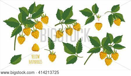 Yellow Raspberry. Raspberries Plants Branches. Sprig Of Cloudberry Set With Berries And Leafs. Eleme