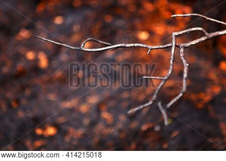 Forest Fire. Burnt Tree Branch Against The Background Of A Burnt Forest.