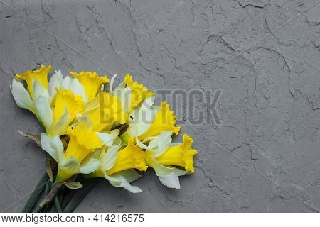 Bouquet Of Yellow Daffodils On Gray Background Of Vintage Putty Wall Close-up Top View, Flat Lay, Co