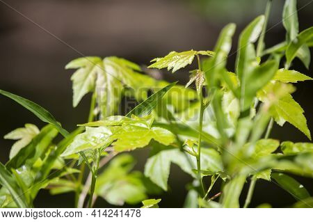 Patch Of Green, Leafy Plants Growing In A Cluster
