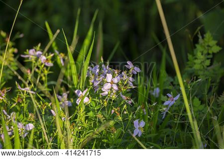 Light Purple And Yellow Flowers In A Field