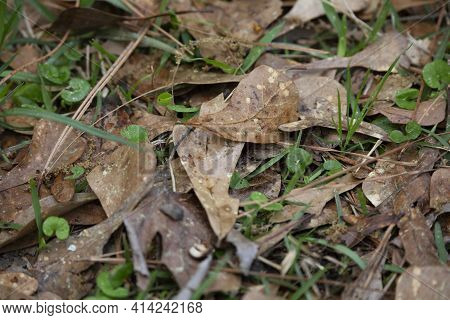 Dried Leaves On The Green Grass Of A Lawn