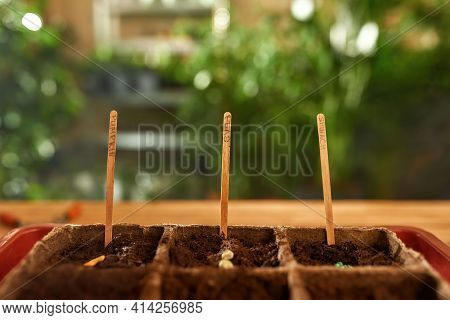 Earth With Grains And Sticks For Growth. Sticks Stick Out From The Ground To Aid The Growth Of Grain