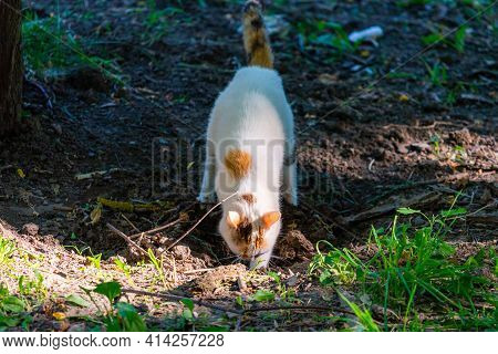 Pooping Cat On The Ground. Natural Process Of Animal.