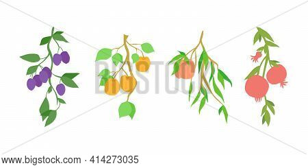 Set Of Fruit Branches. Decoration For Kitchen Design, Food Packaging, Vector Flat Food Illustration,