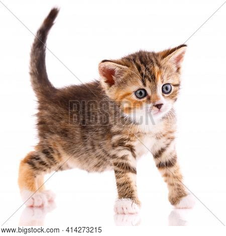 Kitten Looks Interestedly At A Small Camera On A White Background.