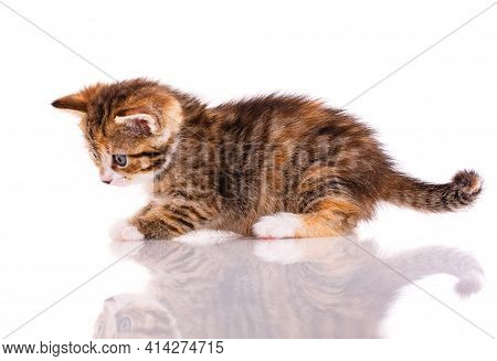 Funny Curious Cat On A White Background.