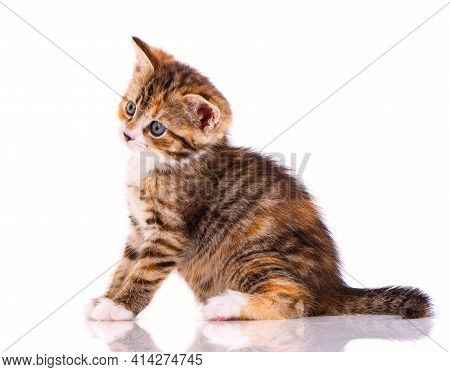 Kitten With A Playful Facial Expression On A White Background.