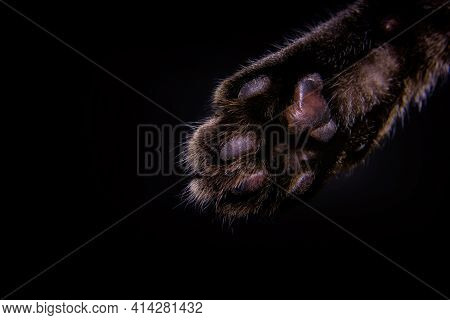 Cat's Foot On A Dark Background Close-up.