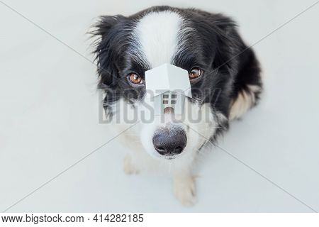Funny Portrait Of Cute Puppy Dog Border Collie Holding Miniature Toy Model House On Nose, Isolated O