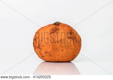 Old Ugly Moldy Orange Isolated On White Background. Spoiled Food.