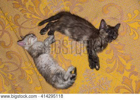 Little Kittens Sleep On A Yellow Bedspread. Two Young Kitties Are Lying Next To Each Other.