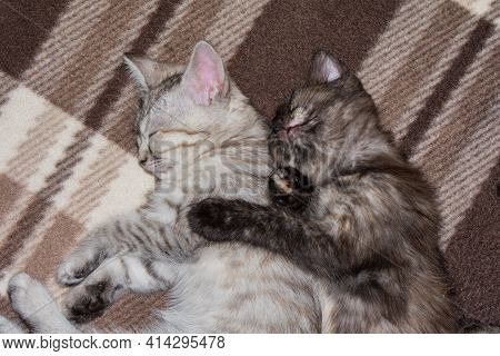 Little Kittens Sleep On A Gray Plaid, Hugging Each Other.